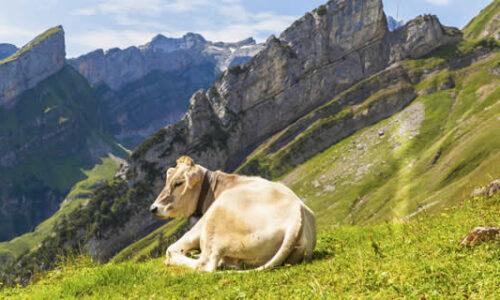 Boerderijvakantie Zwitserland