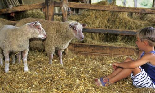 Vakantie op de boerderij in Duitsland