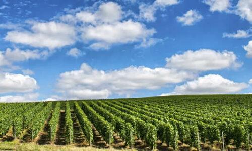 Vakantiehuizen Champagne-Ardenne